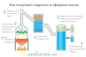 kak-sdelat-hydrolat